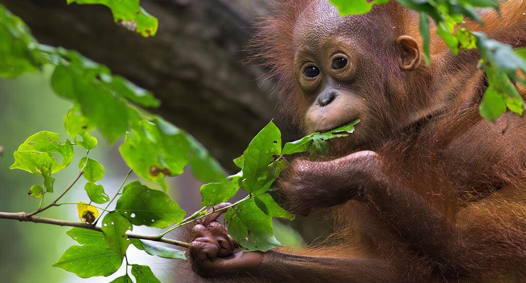 Bintan Monkeys
