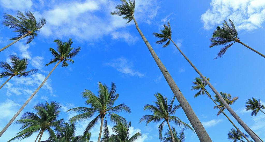 Bintan Palms