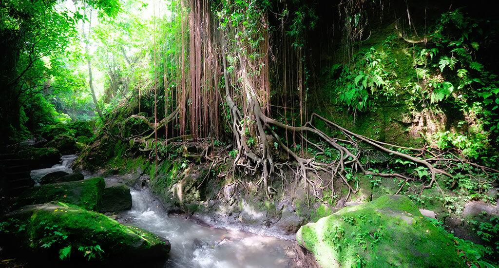 Bintan Jungle