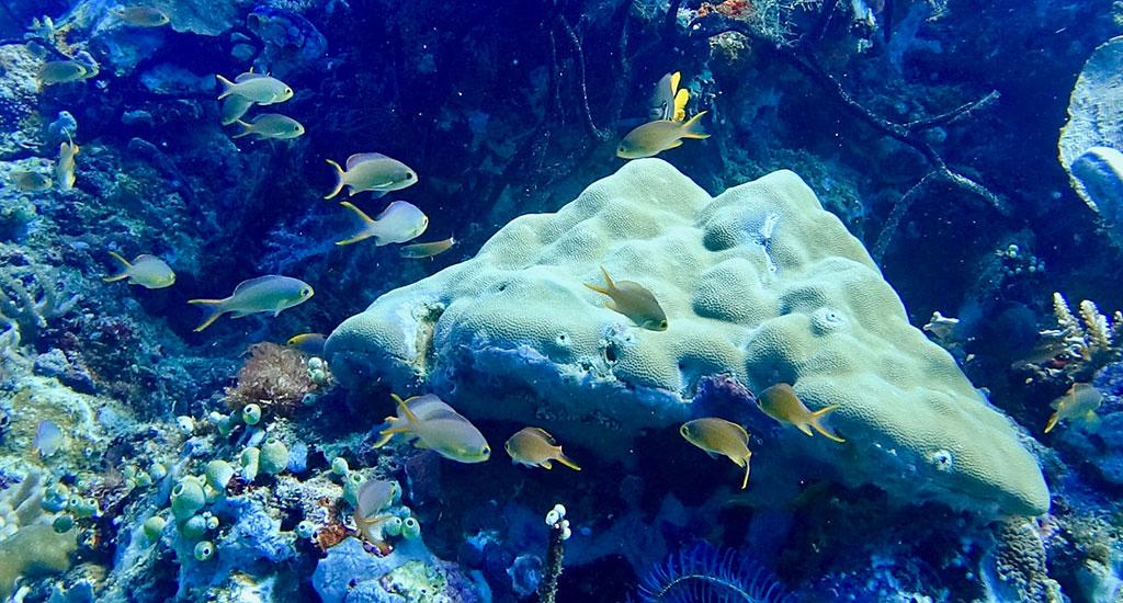 Misool Diving Selat2