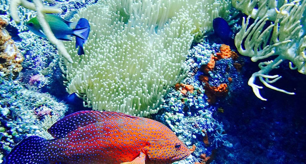 Misool Diving Underwater World