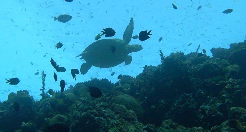 Siladen Diving